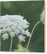 White Starbursts Wood Print