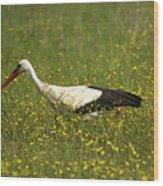 White Stork Looking Fr Frogs Wood Print