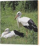 White Storks Wood Print