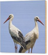 White Storks Wood Print by Wim Lanclus