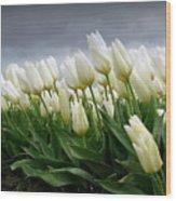 White Stormy Tulips Wood Print