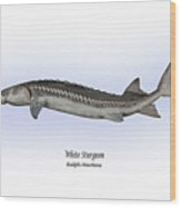 White Sturgeon Wood Print by Ralph Martens