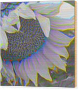 White Sunflower Wood Print