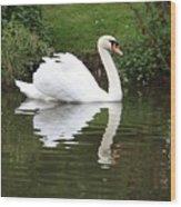 White Swan In Belgium Park Wood Print