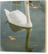 White Swan With Reflection Wood Print