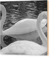 White Swans Wood Print