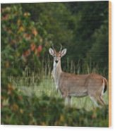 White-tail Buck Through The Trees Wood Print