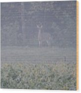 White Tail Deer Wood Print