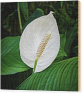 White Tail-flower Wood Print