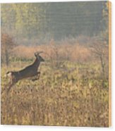 White Tail Morning Wood Print