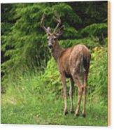 White Tailed Buck Wood Print