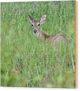 White-tailed Deer Bedded Down In Tall Grass Wood Print