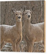White-tailed Deer Pair Peering Out From Snowstorm Wood Print