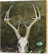 White-tailed Deer Skull In The Woods Wood Print