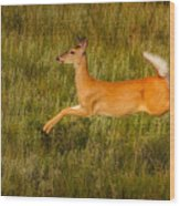 White-tailed Doe Leaping Wood Print