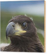 White-tailed Eagle #1 Wood Print