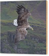 White-tailed Eagle Banks Wood Print