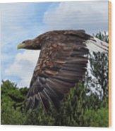White Tailed Eagle Wood Print