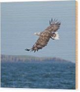 White-tailed Eagle Over The Sea Wood Print
