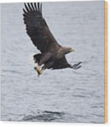 White-tailed Eagle With Catch Wood Print