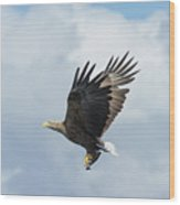 White-tailed Eagle With Fish Wood Print