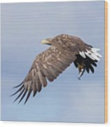 White-tailed Eagle With Lunch Wood Print