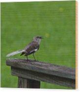 White Tailed Mocking Bird Wood Print