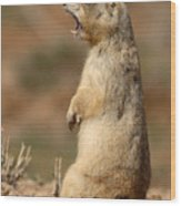White-tailed Prairie Dog Giving A Fierce Bark Wood Print
