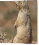 White-tailed Prairie Dog Giving A Fierce Bark Wood Print