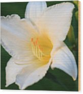 White Temptation Lily Wood Print