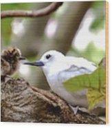 White Terns Koa And Parent...bird Love Wood Print