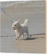 White Terrier Wood Print