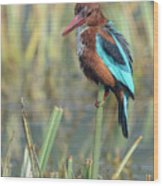 White-throated Kingfisher 13 Wood Print