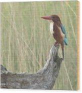 White Throated Kingfisher Wood Print