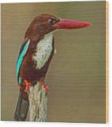 White-throated Kingfisher Wood Print