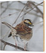 White Throated Sparrow 2 Wood Print
