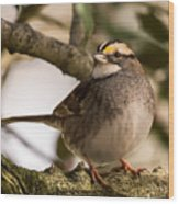 White Throated Sparrow On Branch New Jersey Wood Print