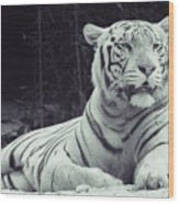 White Tiger 16 Wood Print