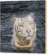 White Tiger 20 Wood Print