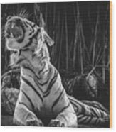 White Tiger. Growl. Wood Print