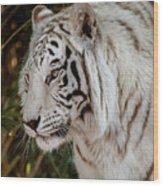 White Tiger Portrait 2 Wood Print