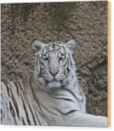 White Tiger Resting Wood Print