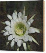 White Torch Cactus  Wood Print