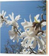 White Tree Flowers Art Prints Magnolia Blue Sky Floral Baslee Troutman Wood Print