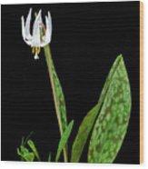 White Trout Lily Wood Print