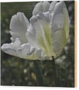 White Tulip 1 Wood Print