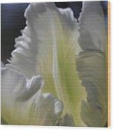 White Tulip 2 Wood Print