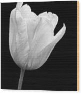 White Tulip Open Wood Print