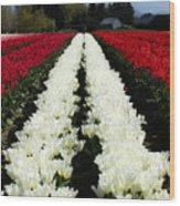 White Tulip Rows Wood Print