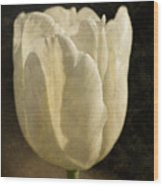 White Tulip With Texture Wood Print